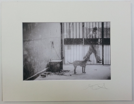 The Second Dog Romania 1994 £35 mounted and wrapped
