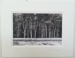 Tree Line Coldwell 2014 £35 Mounted and wrapped