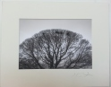 Tree Foulridge, 2014 £35 mounted and wrapped