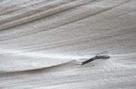 Sand, Matt Gartside