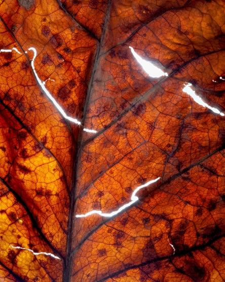 gold torn leaf matt