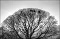 Tree at Foulridge, Matt Gartside