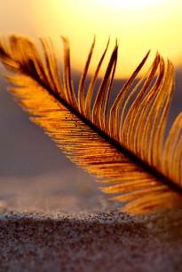 Beach Feather at Dusk