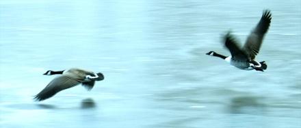 Matt Gartside: Geese over frozen Widdop